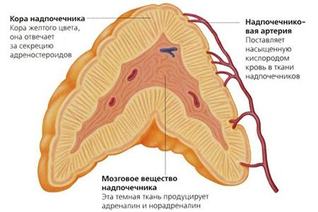 дисфункция надпочечников